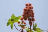 Fruit - 056.JPG