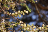 Spring affect - 055h.JPG