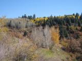 Colorado_2008 086a.JPG