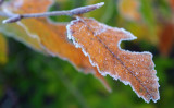 Frosty morning in the park  #2