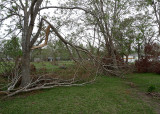 TREES AND LIMBS WERE DOWN EVERYWHERE