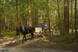 Carriage Ride in Cades Cove
