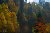Autumn in High Country