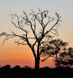 Elephant Plains Sunset