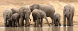 Elephants 10