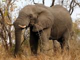Elephants 12