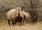 Kruger National Park June 2008