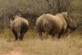 Rhino leaving