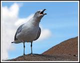 Bird on a Heap