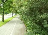 13/6/2008 : Woluwe-St-Lambert, Boulevard de la Woluwe.
