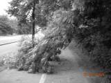 25/6/2008 : Woluwe-St-Lambert, Boulevard de la Woluwe.