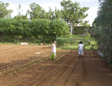 Ploughing the field.jpg
