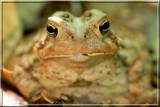 Toad044.JPG