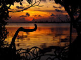 Prospect Sunset