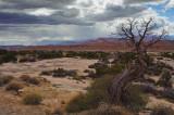 Cedars Before the Storm II