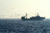 Fishing Boat - Barca de Pesca