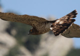 Birdwatching in Tarifa and Gibraltar - The best raptor migration in Western Europe