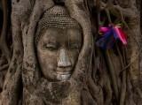 Ayuttaya. Buddha & Banyon Tree