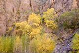 Fall Colors 4.jpg