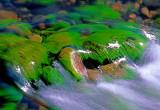 (SED 13) Algae Covered Rocks, Oak Creek, Sedona, AZ