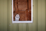 Owl_Barn