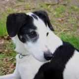 Joop's Dog Log - Sunday May 02