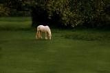 Upon a Golden Horse