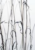 autumn sketch 420