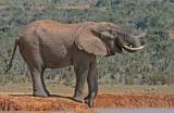 elephant 11.jpg