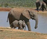 elephants 23.jpg