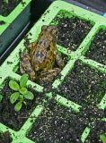 frog in seed tray.jpg
