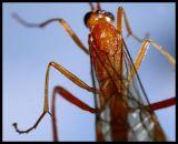 DSC01039 Insekt.jpg