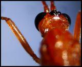 DSC01054 insekt.jpg