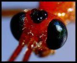 DSC01092 Insektshuvud.jpg