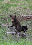 Brown cubbie