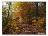 herbstlicher Waldweg / autumnal forest track (2318)
