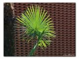 Palme /palm tree