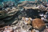 laionaaaa! aquí gairebé t'atropello per no trepitjar el corall! quin estrés que vaig passar!!! (si... sobretot estrés...)
