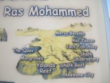 i les J&B anem a fer inmersió a Sharm: Shark Observatory, Yolanda Reef i Mersa Bareka