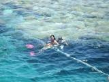 fent snorkel