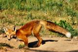 FOX HOLE 840.jpg
