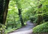 A path through the woods.jpg