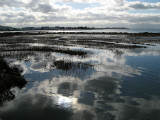Pt Isabel at high tide_2102