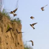 Op weg naar het nest