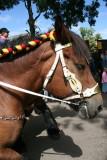 Paard bij oude ambachten