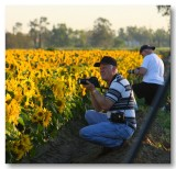 Pbase Members Bill Taylor & his brother Don shooting SunFlowers
