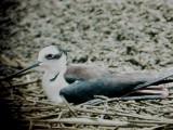 Birds of June 2008