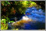 DSC08249 enh blur.jpg