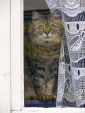 un chat curieux