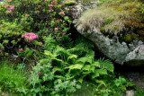 ferns and rhododendrons.